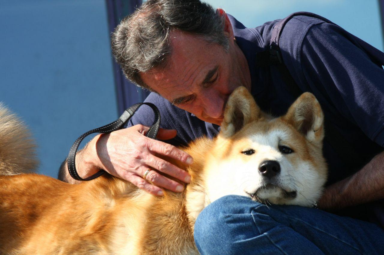 Affectionate Akita Dog