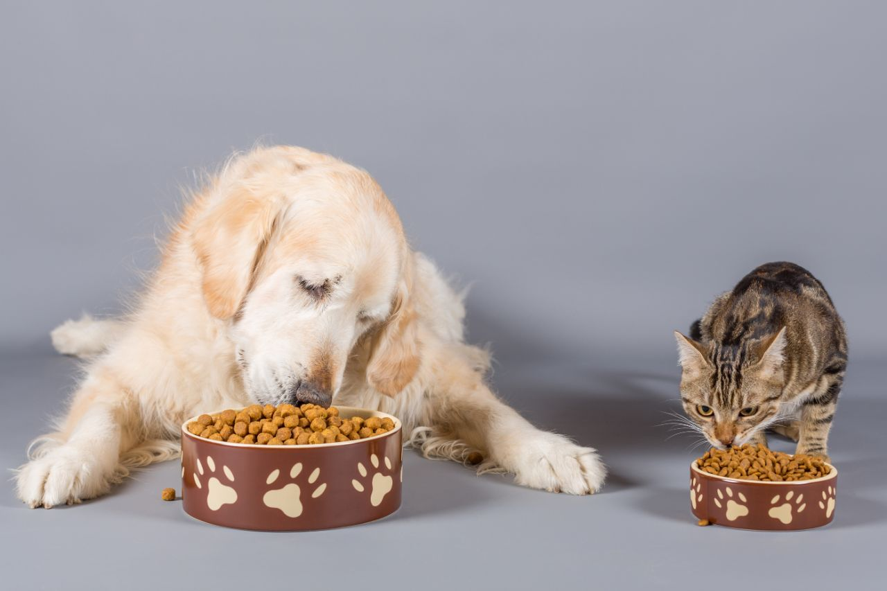 Dog and Cat Eating in Bowls