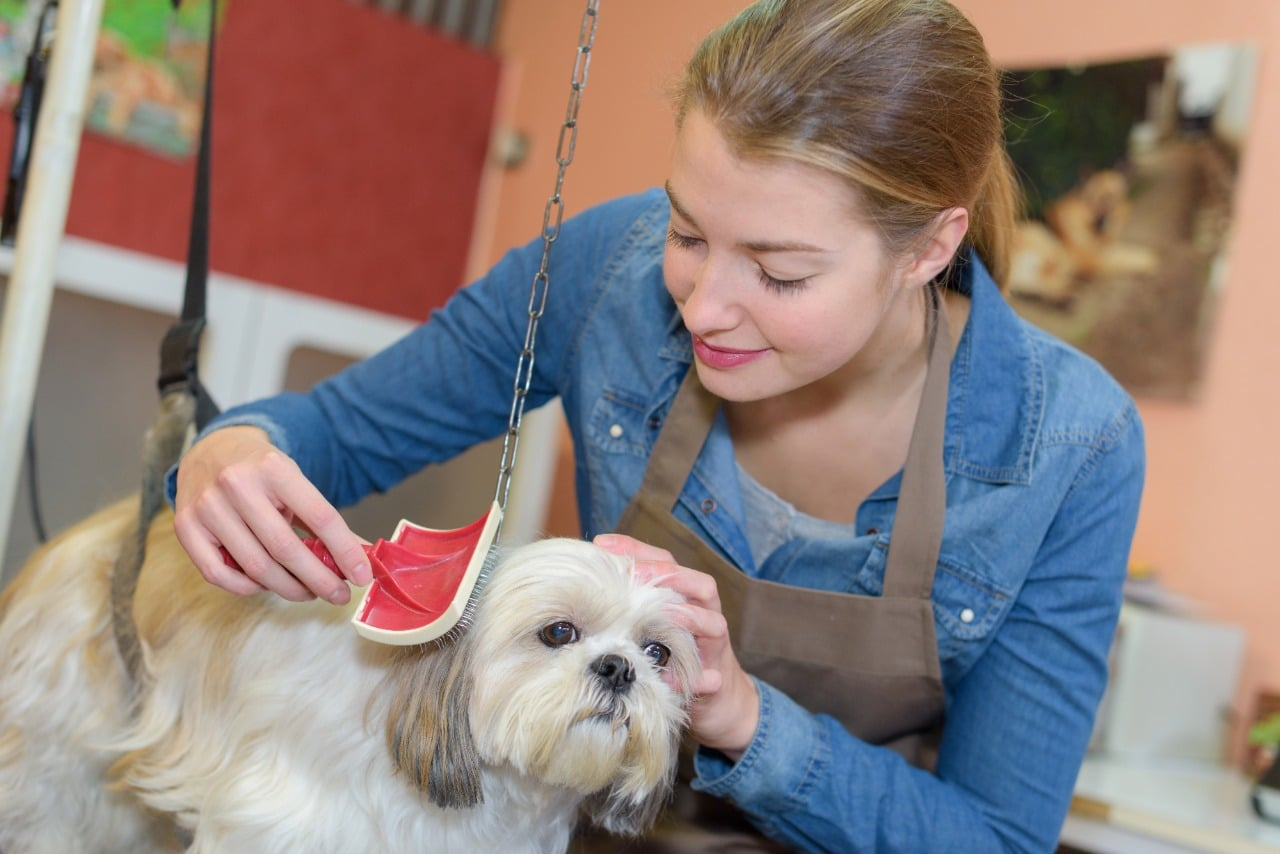 Woman grooming small dog