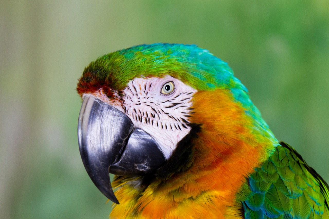A photo of a macaw parrot