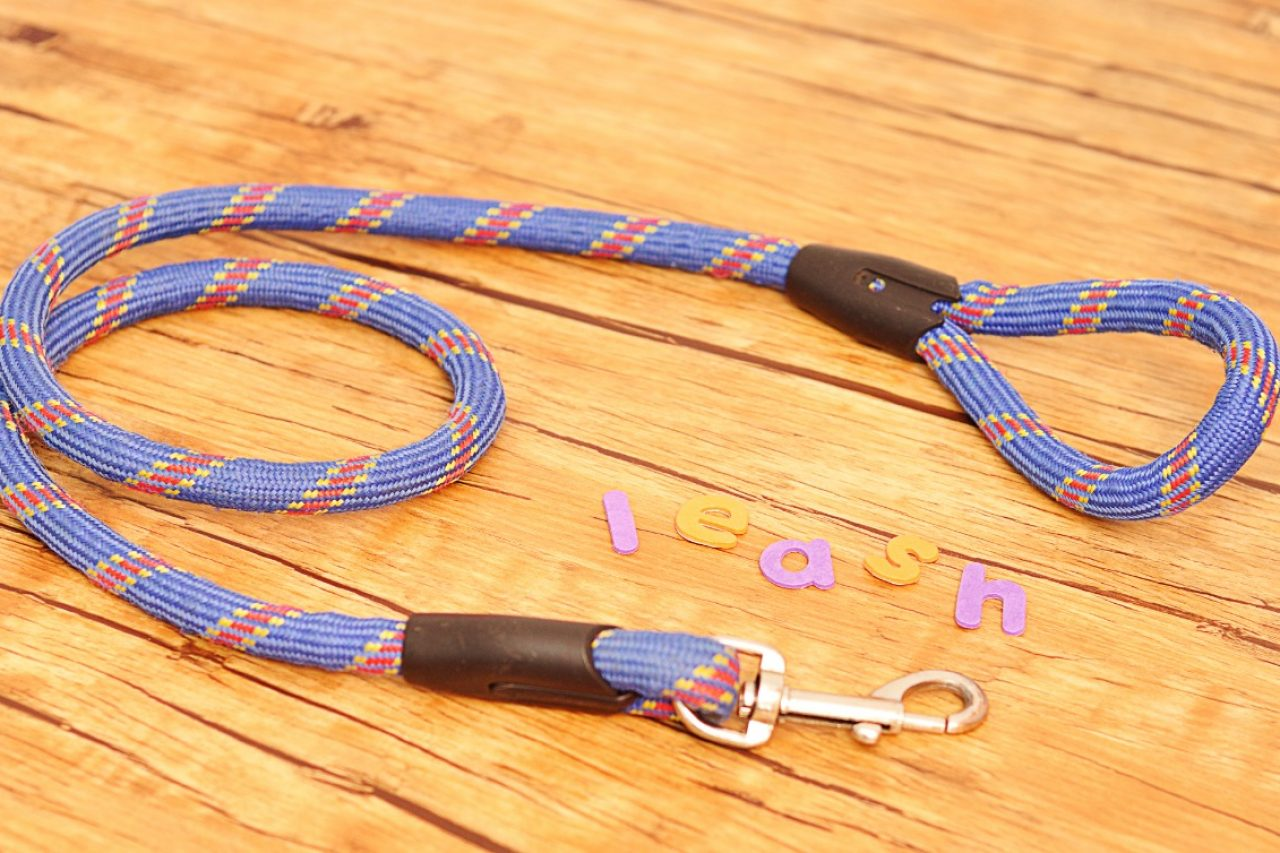 Blue leash for dog