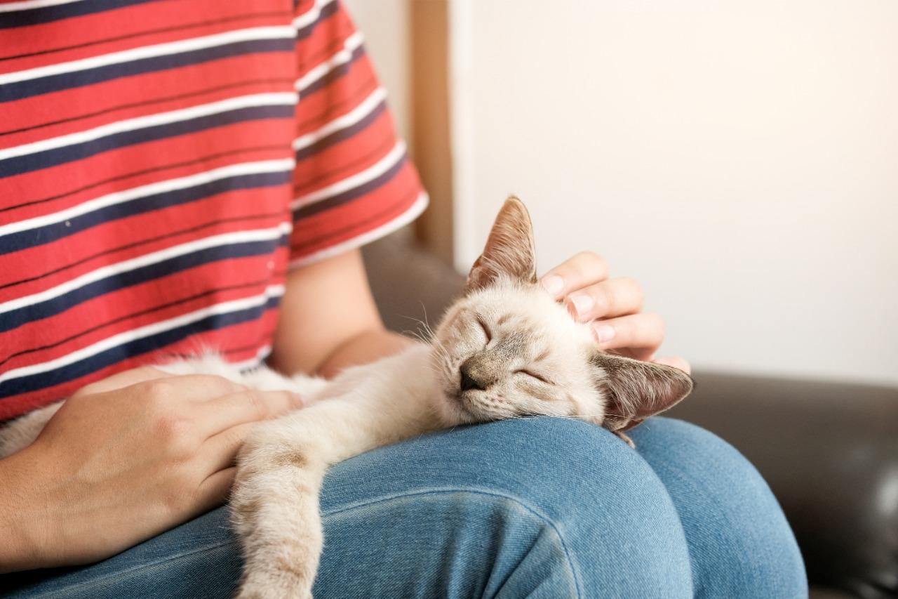Cute cat sleeping on owners lap