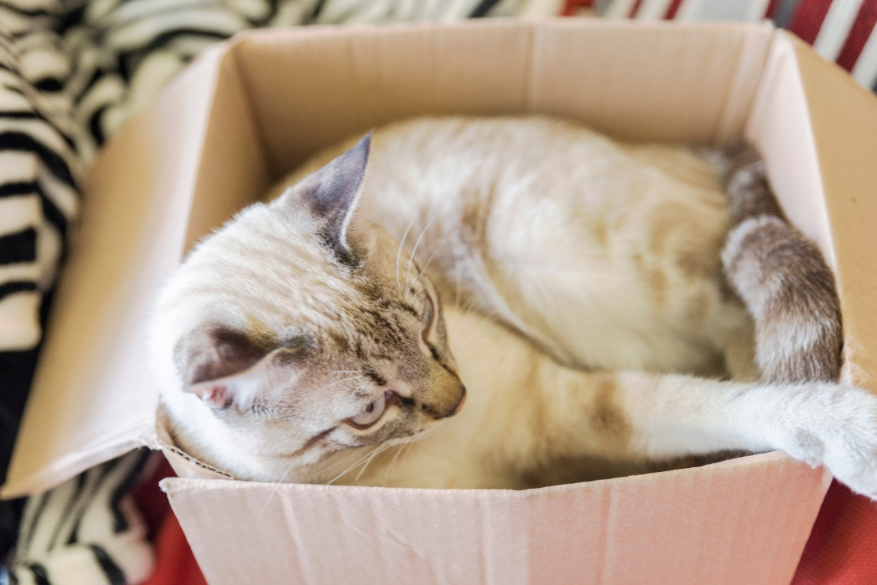 cat playing tucked inside a cardboard box