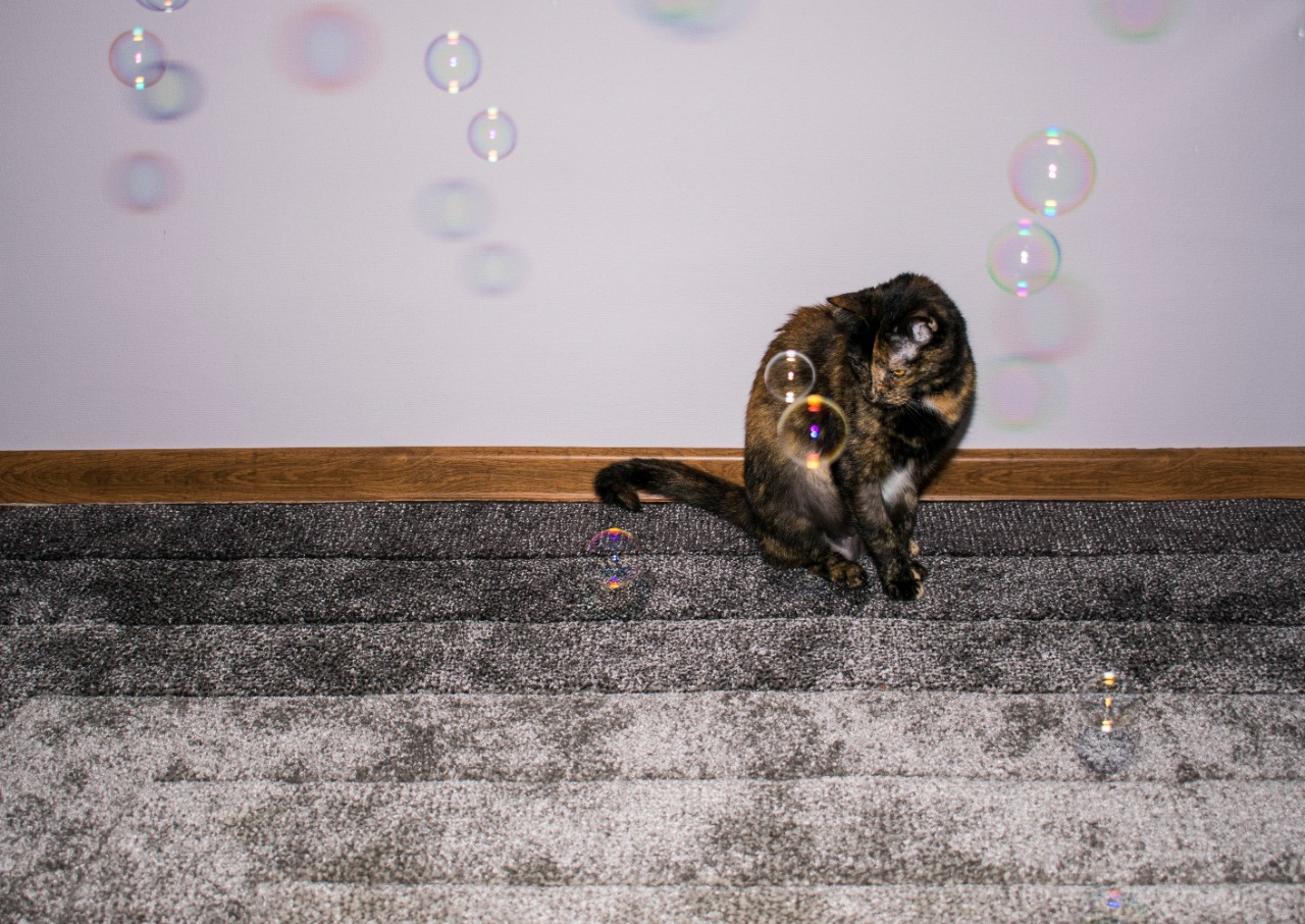 cat playing with soap bubbles