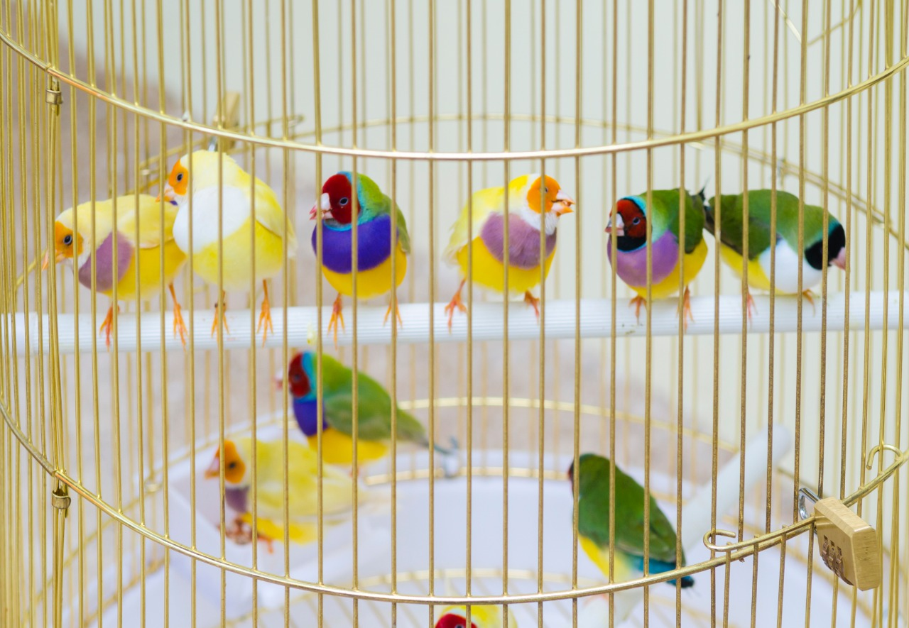 group of finches sitting on a perch in a cage