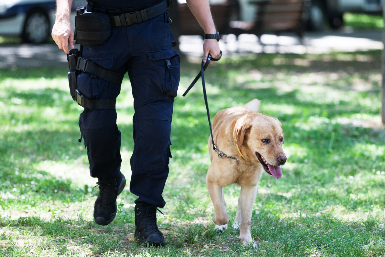 police officer with labrador retriever dog on duty