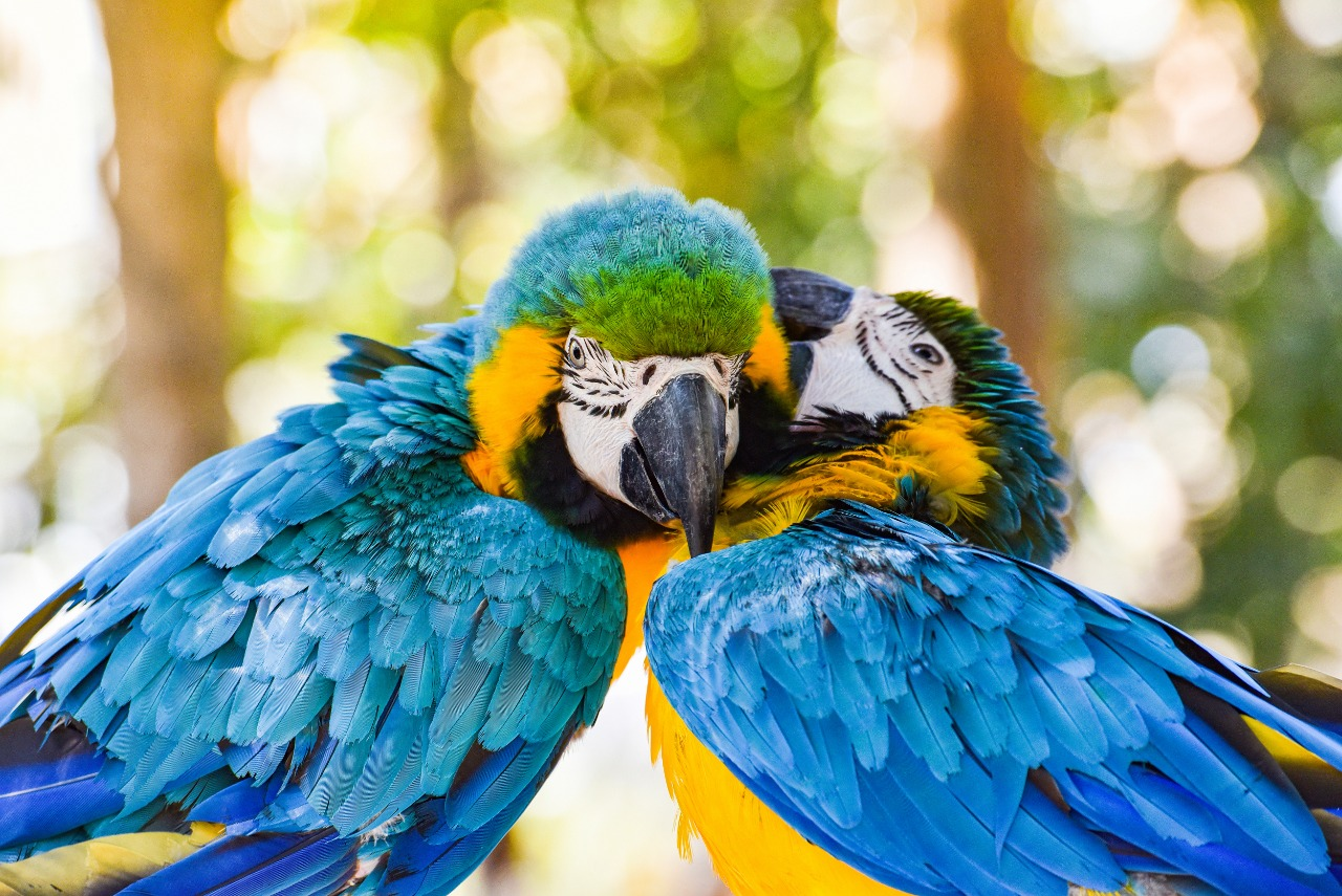 yellow and blue wing macaw birds parrot on a tree branch