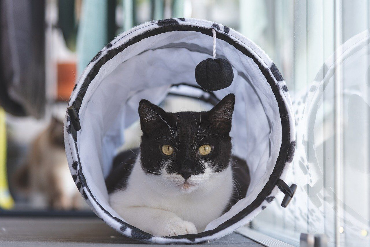 Tuxedo cat laying inside play house