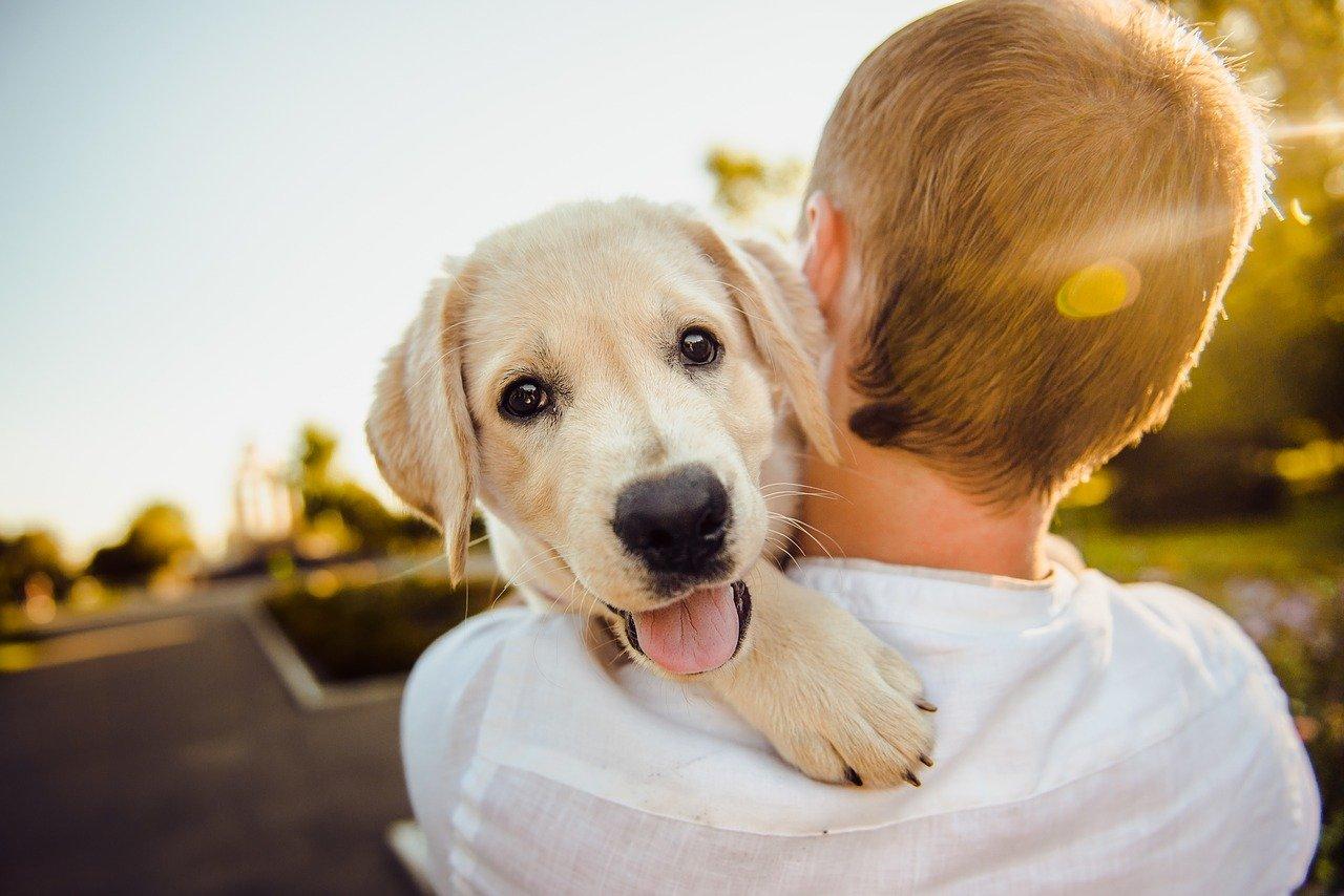 Dog on the shoulder of its owner
