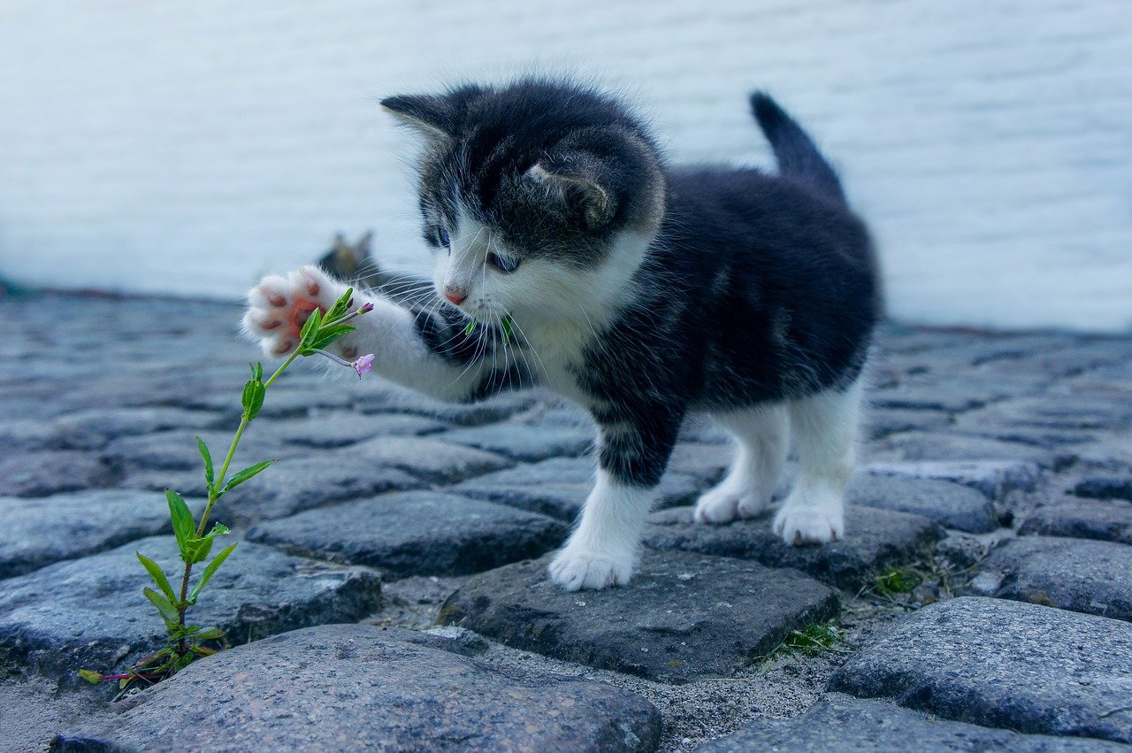 black gray and white cat outside touching plant