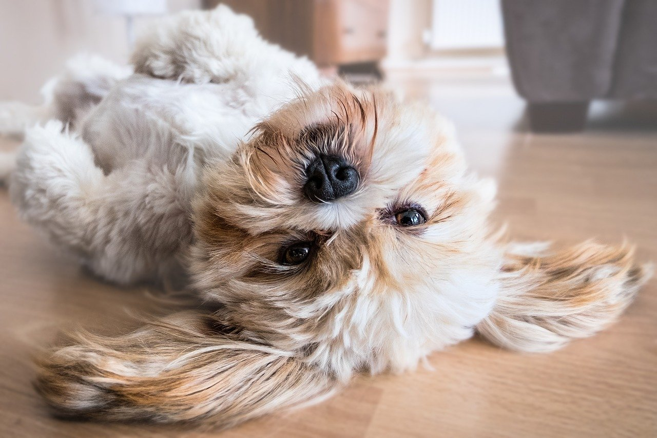 Cute dog laying on his back