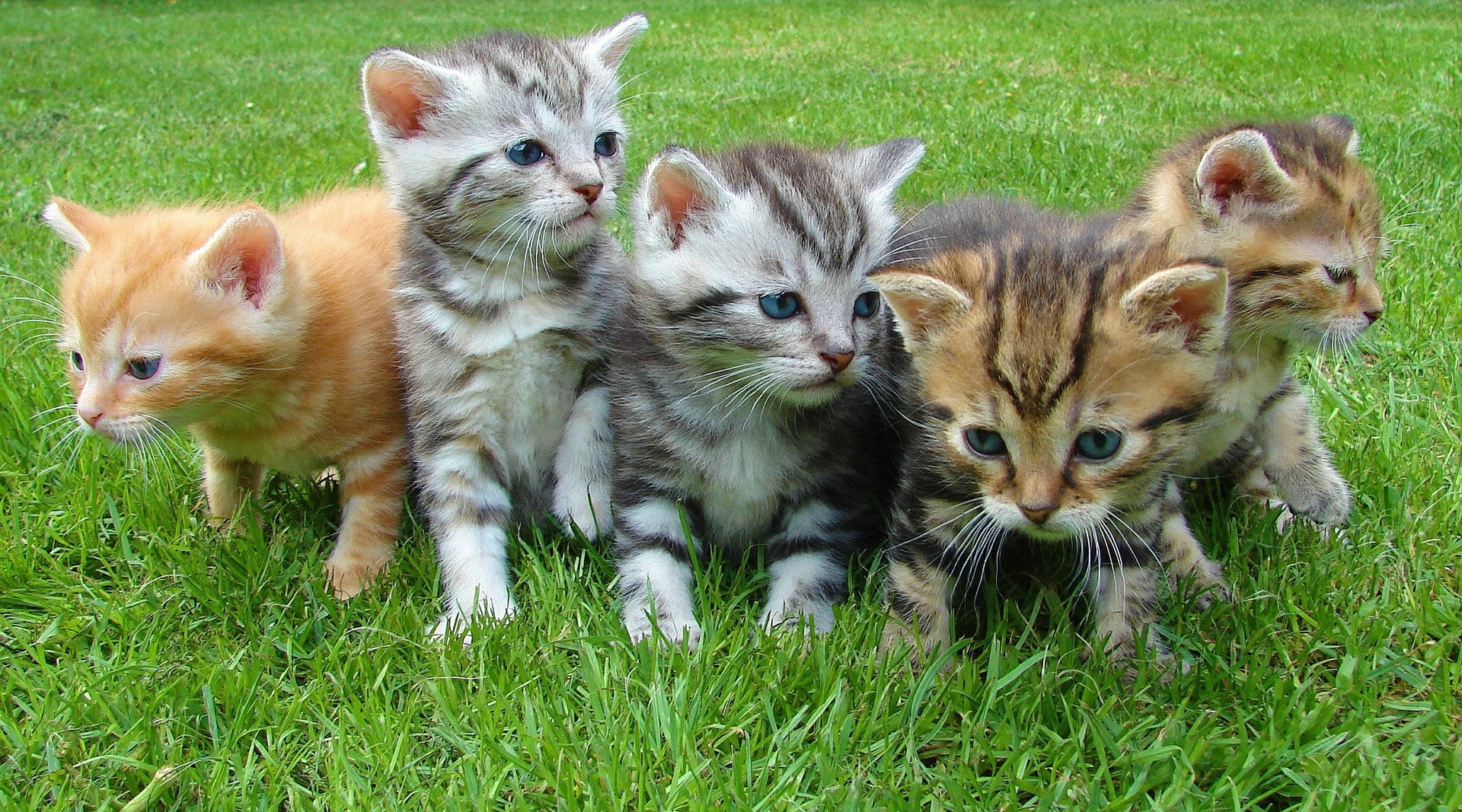 five cats outside on the grass