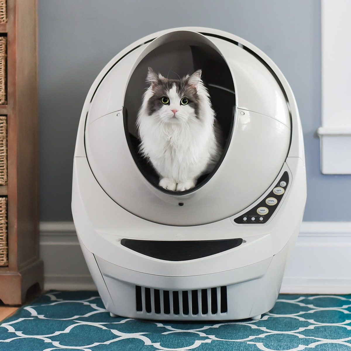 Automatic cat litter box